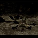 wile-e-coyote